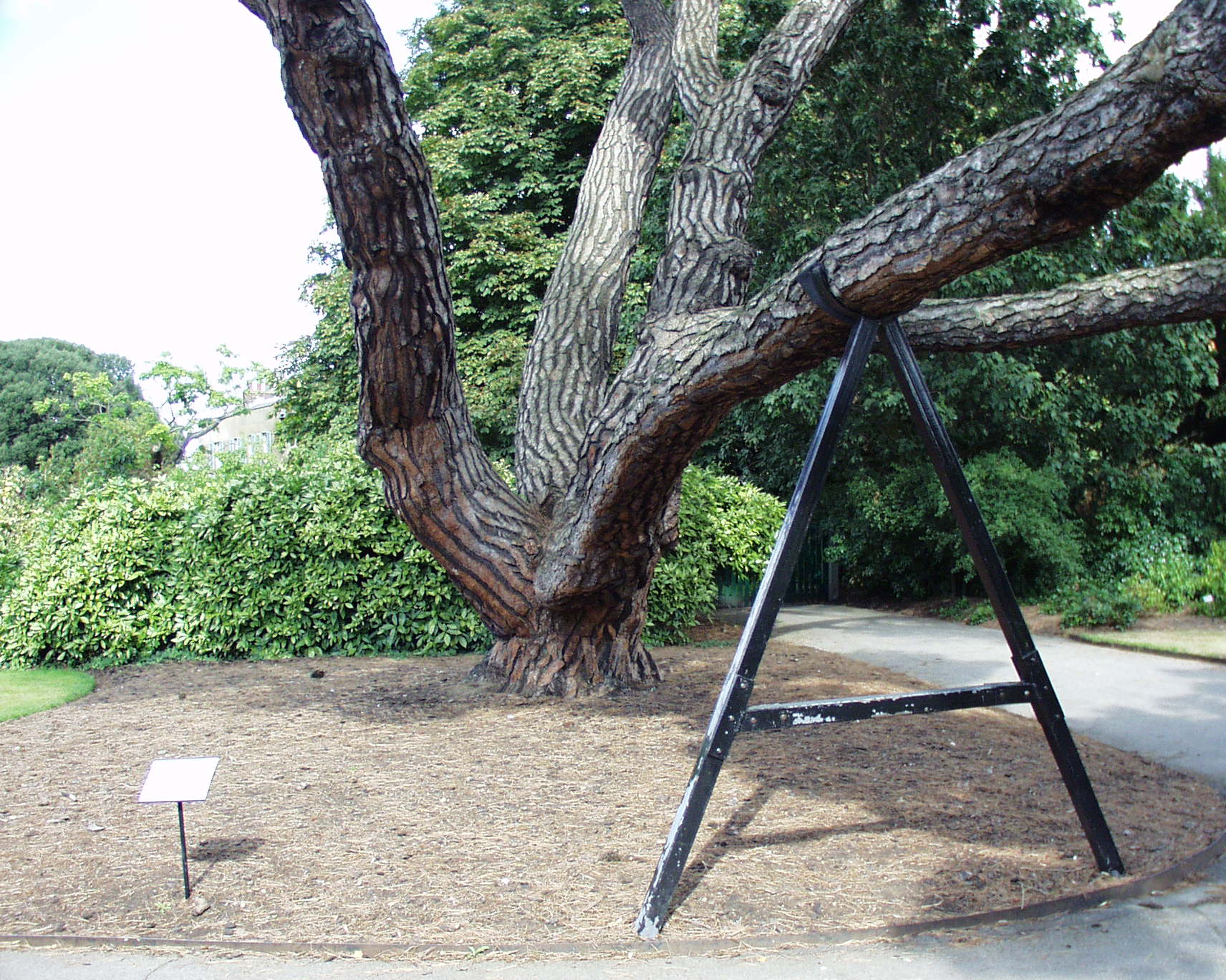 2000-09-03 Kew Gardens