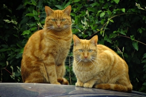 2015-09-03 The LOL-Cats