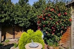 2020-04-09 p2390970 garden portuguese laurels and camelia